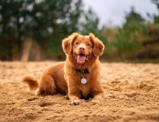 hond verzekeren
