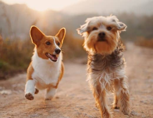 petplan huisdierenverzekering