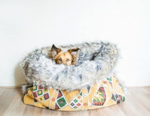cadeau hond