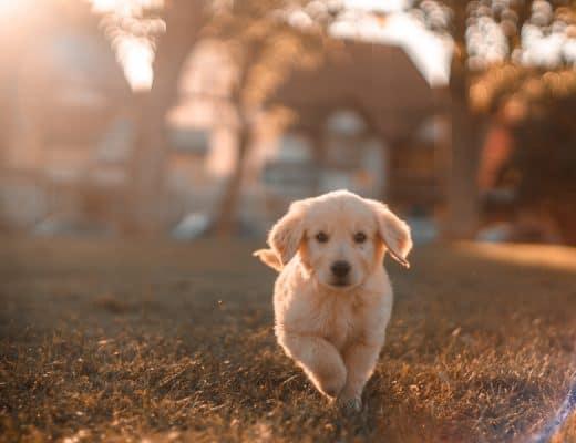 hond registreren