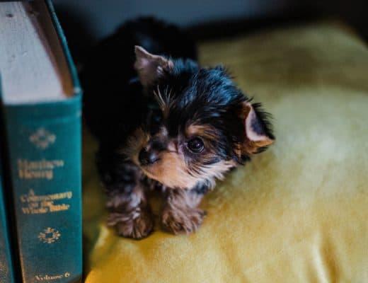 puppy opvoeden boek