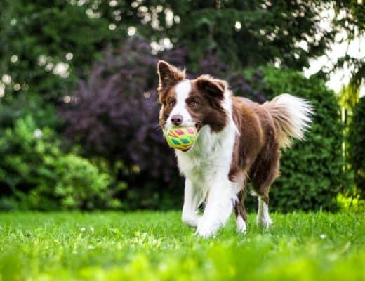 beste huisdierenverzekering hond