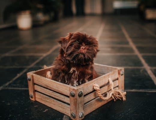 beste hondenbench pup
