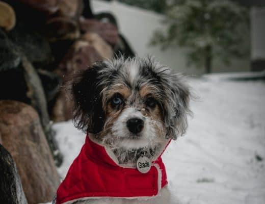 hond beschermen kou